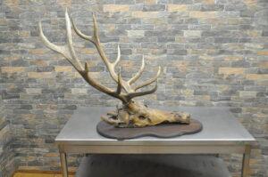 鹿 角 ツノ 頭蓋骨 骨 ボーン オブジェ 飾り 幅79cm 高さ77cm 奥行93cm インテリア ヘッドを買い取りました♪(^_-)-☆